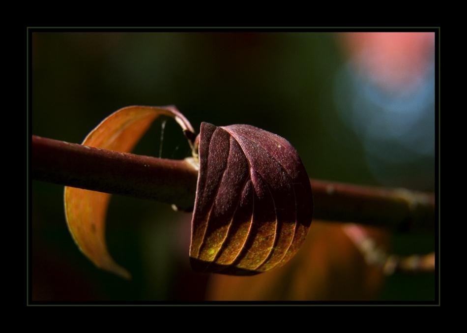 Herbstgedanken XXXVIII