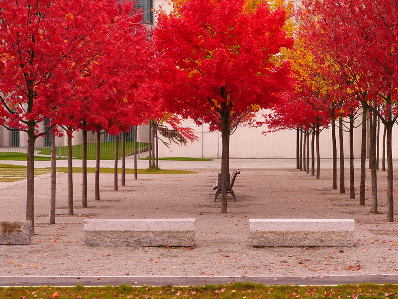 Herbstgeflüster