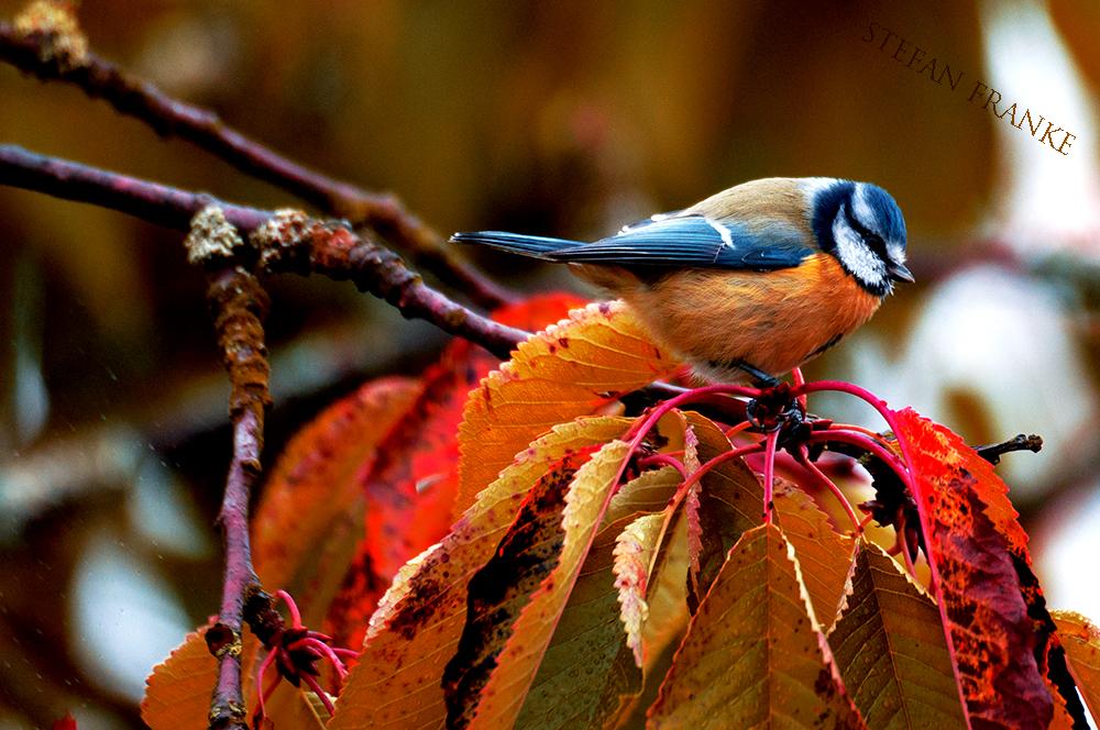 Herbstgeflüster in den bunten Bäumen