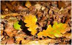 ...HerbstGefühl....