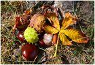 HerbstGefühl II ...