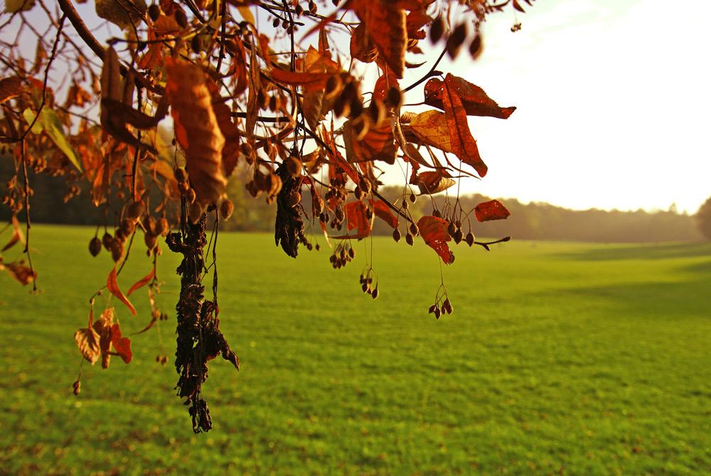 Herbstgehänge