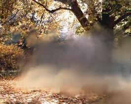 Herbstgeist...