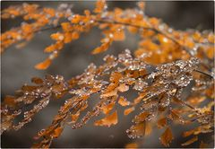 Herbstglitzern