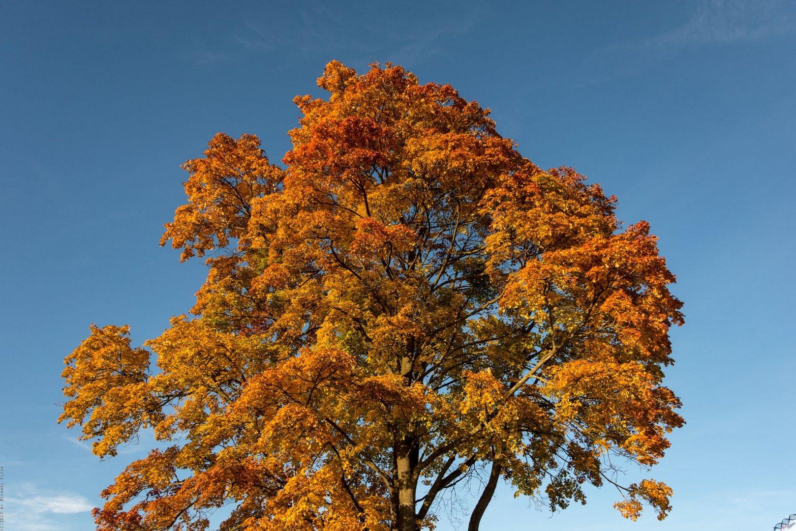 Herbstglühen 1