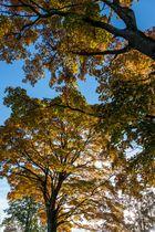 Herbstglühen 2