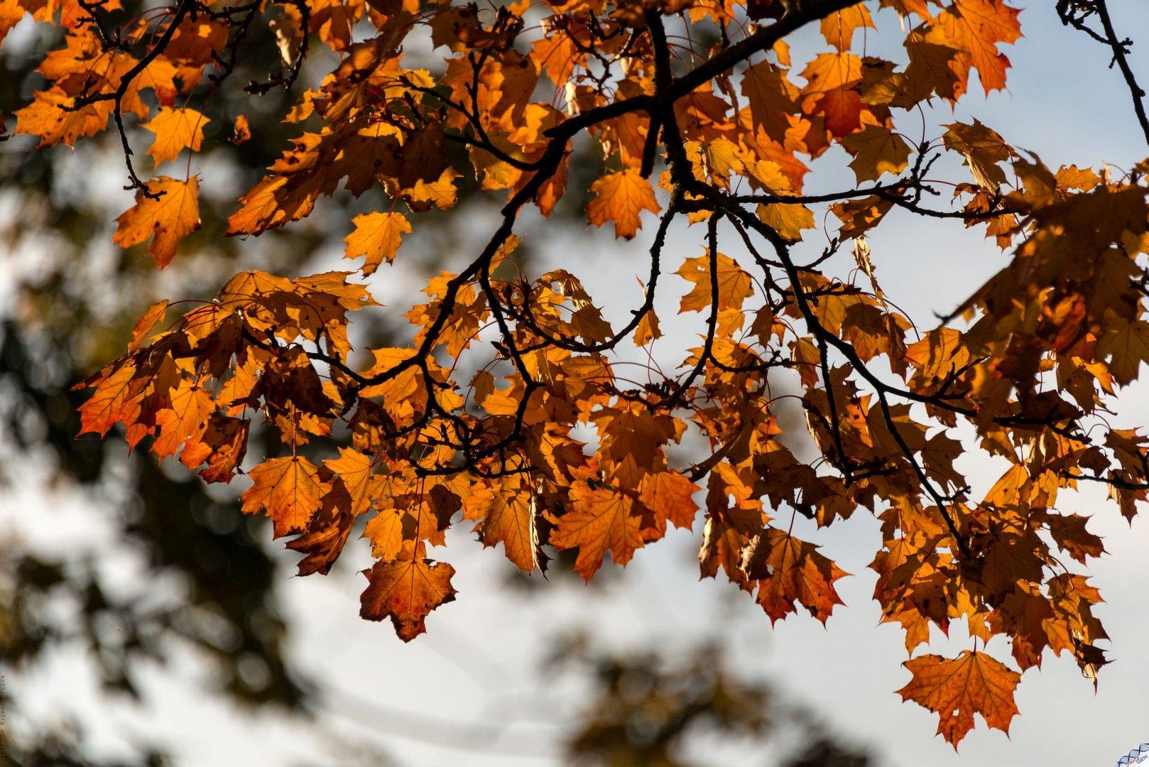 Herbstglühen 4