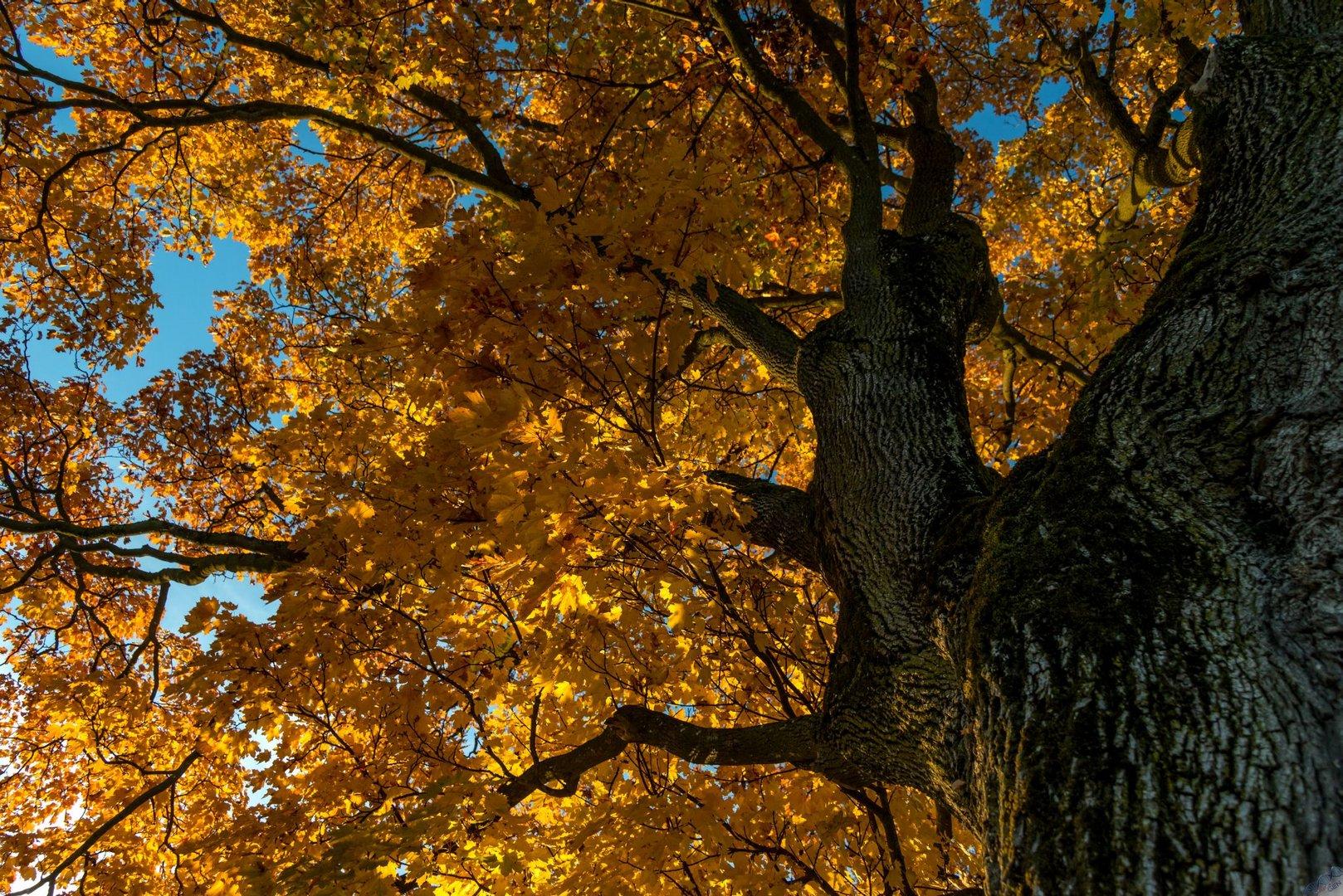 Herbstglühen 5