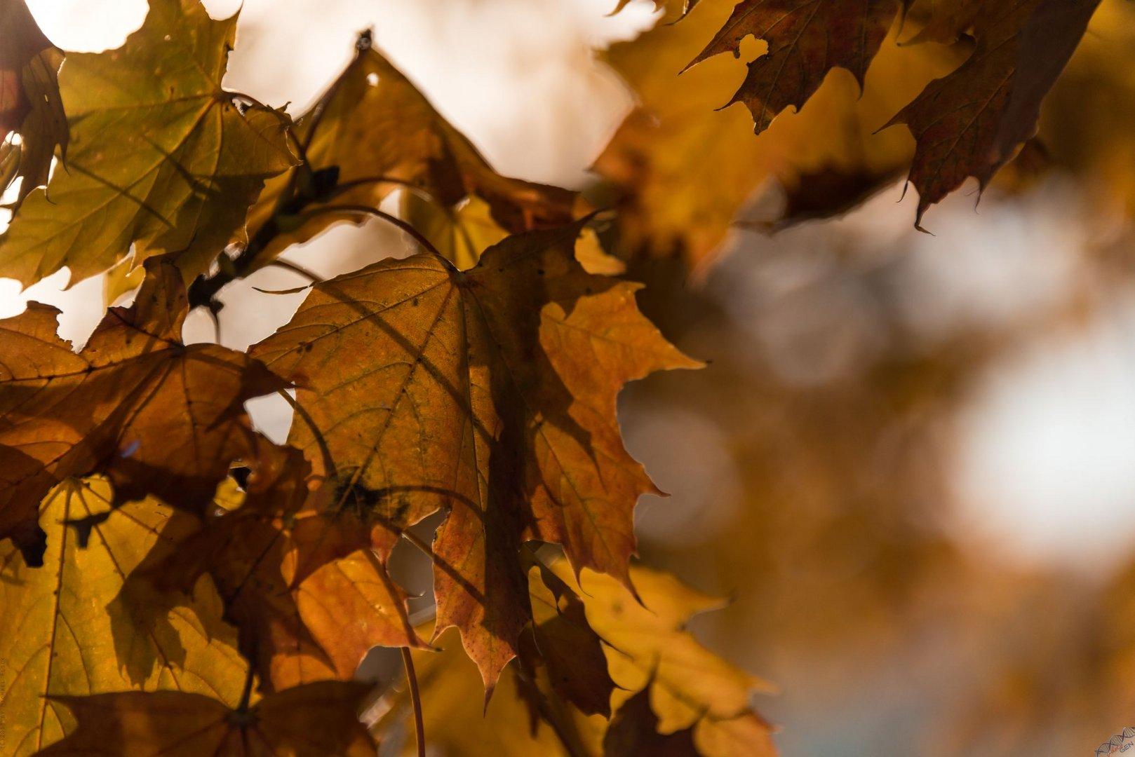 Herbstglühen 7