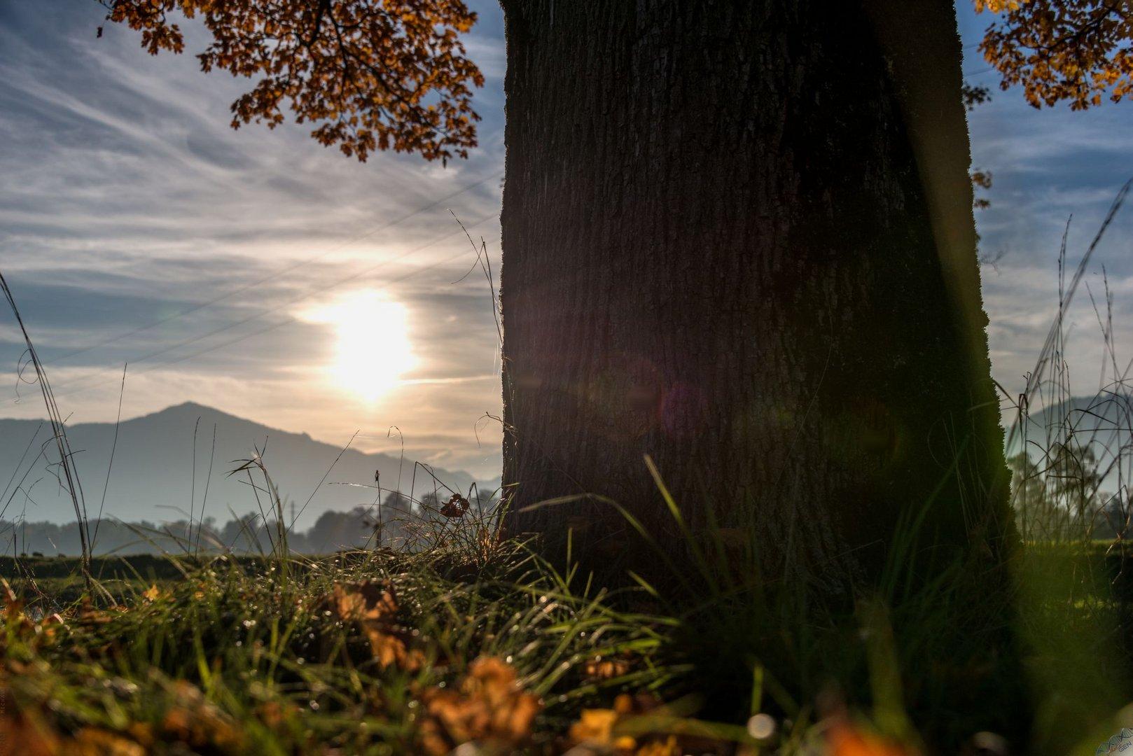 Herbstglühen 8