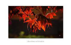 Herbstglühen