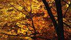 "Herbstgold ""2"""