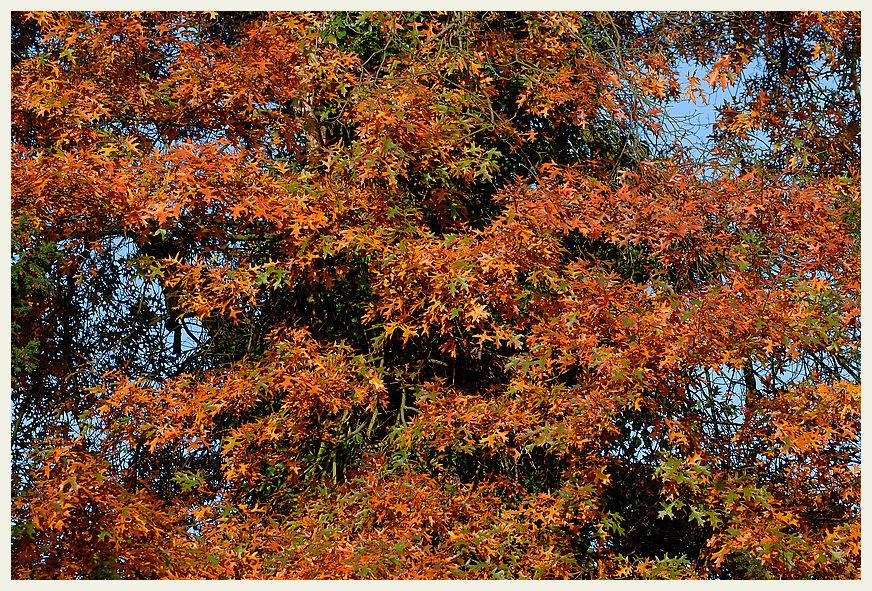 Herbstgold *