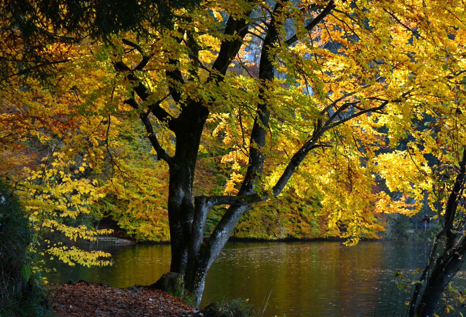 * Herbstgold *
