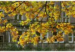~ Herbstgold ~