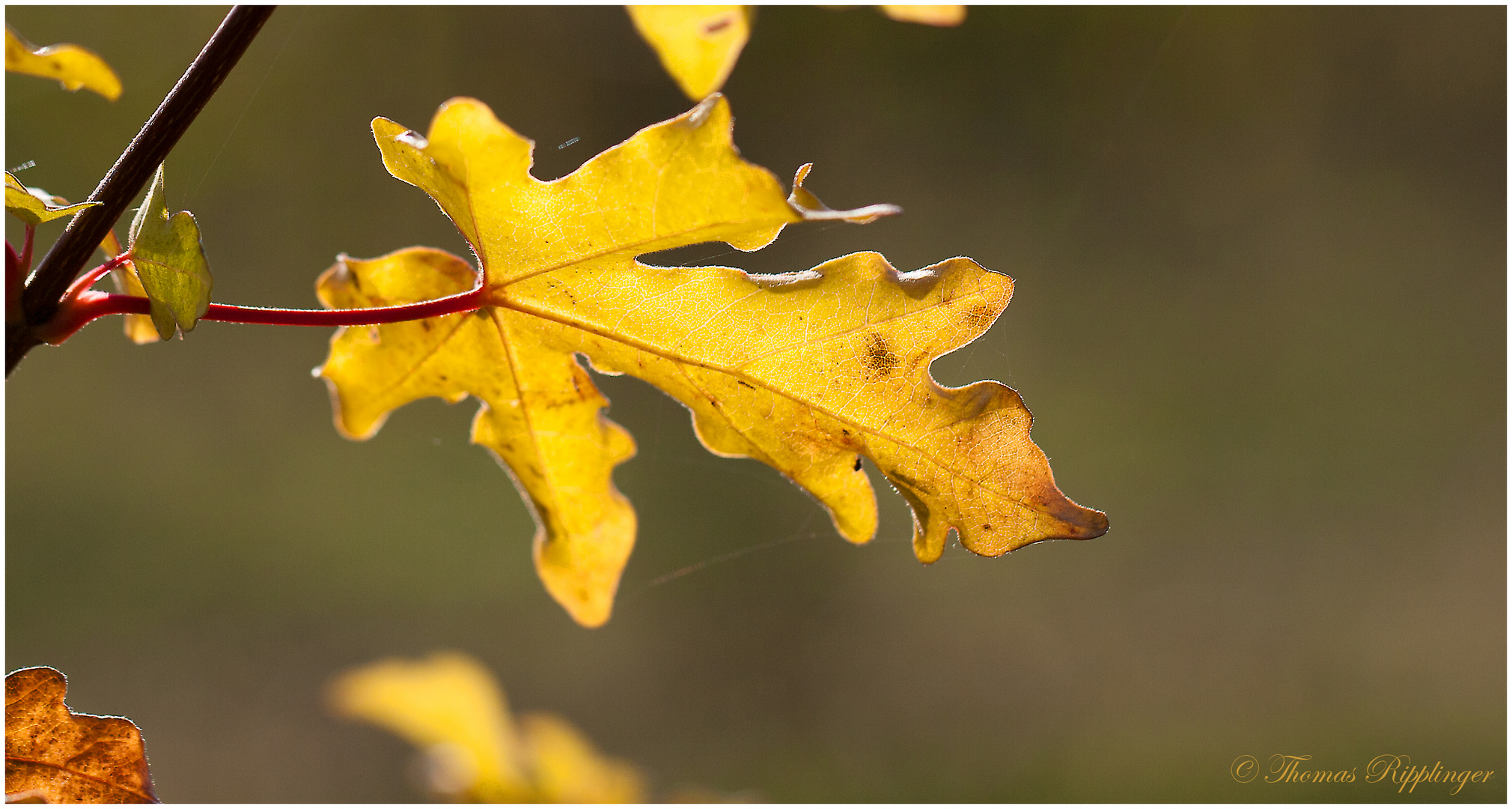 Herbstgold....
