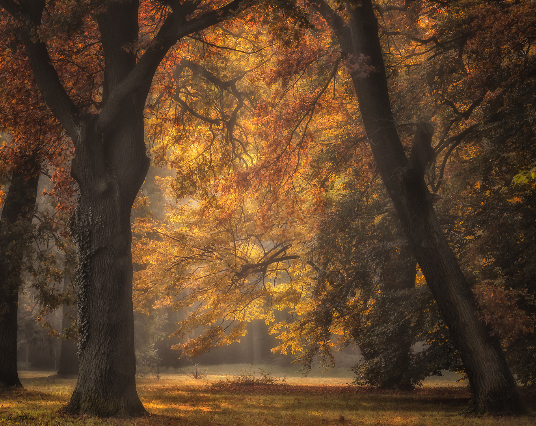 Herbstgold ...