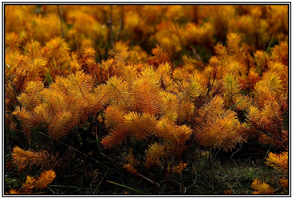 Herbstgräser