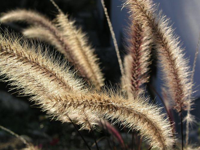 Herbstgras