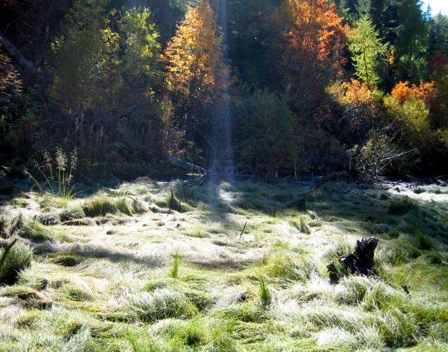Herbstgras im Hochmoor (Schweiz)