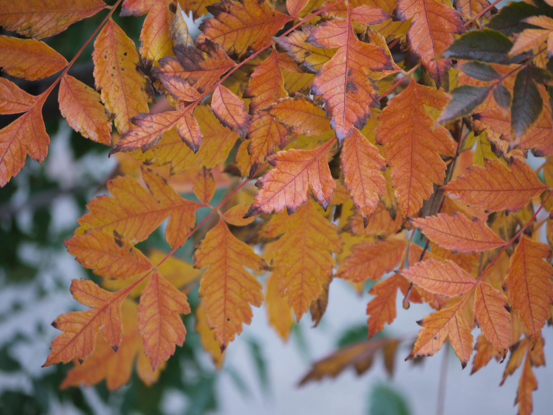 Herbstgrüsse