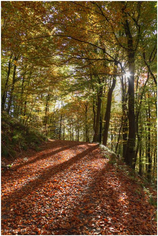 Herbstgrüße...