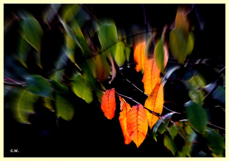 .....Herbst.Gruß.....