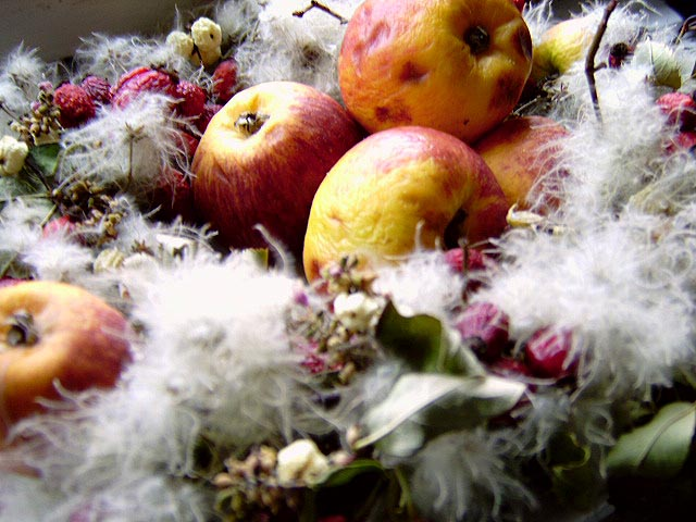 Herbstgruß . . .