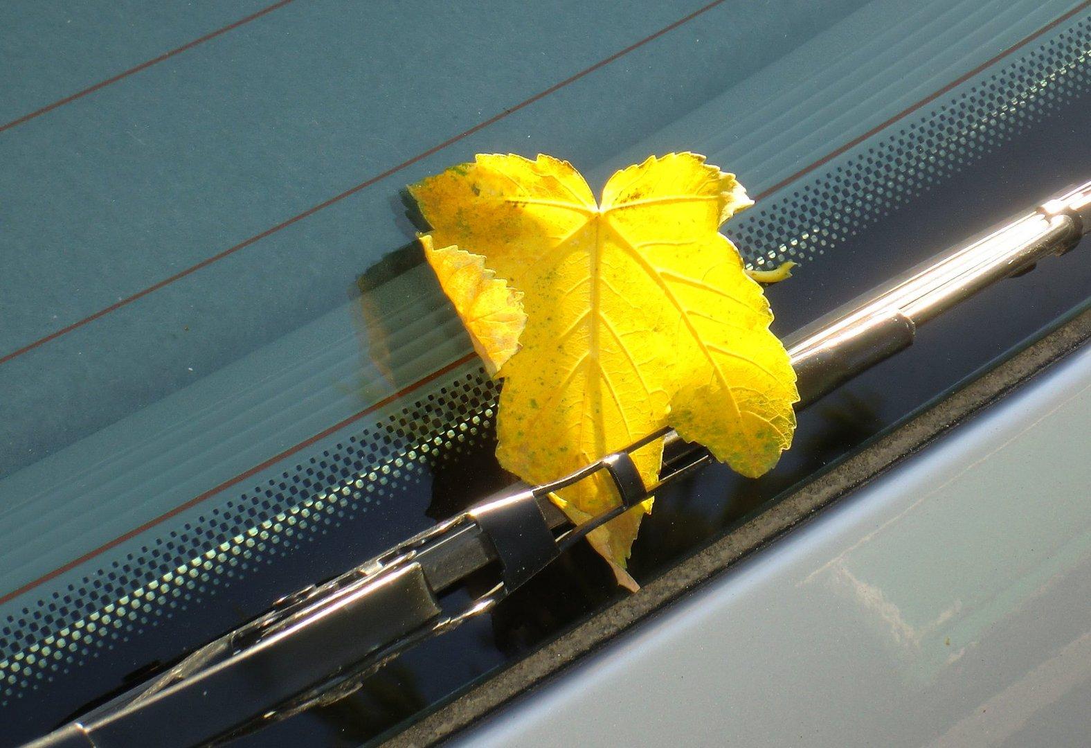 Herbstgruß für mein Auto