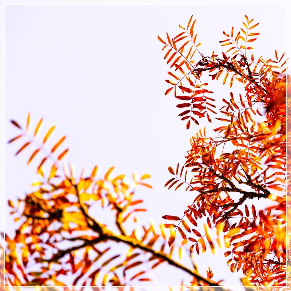 Herbstgruß I