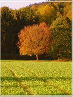 Herbstgruss II.