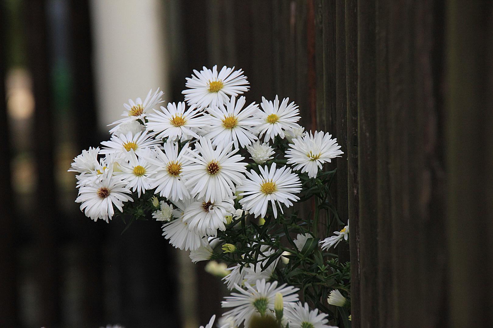 Herbstgruß in weiß