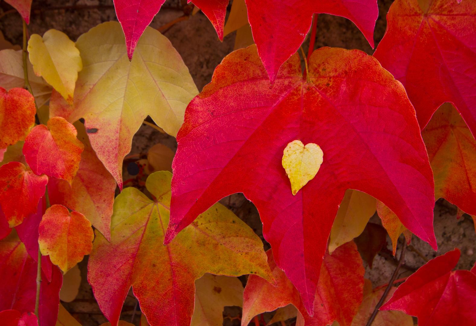 Herbstherz