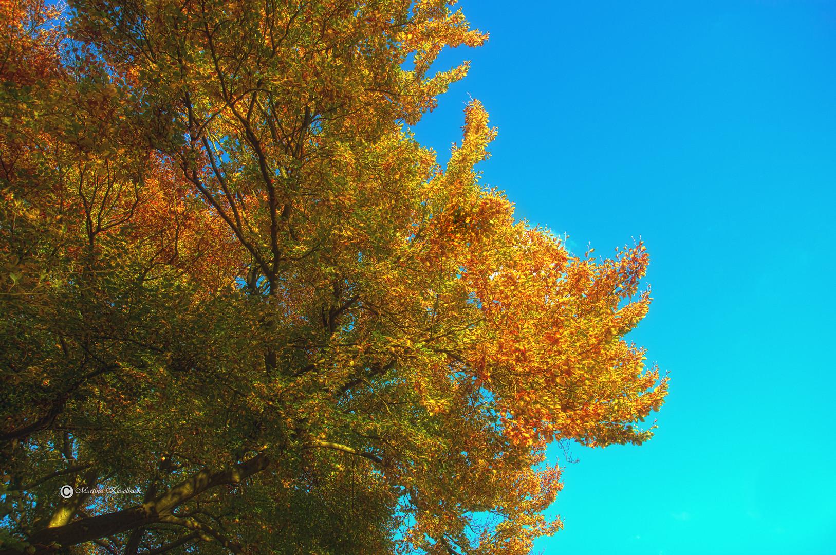 Herbsthimmel.
