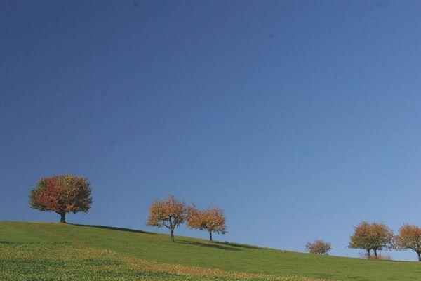 Herbsthormone...im Detail