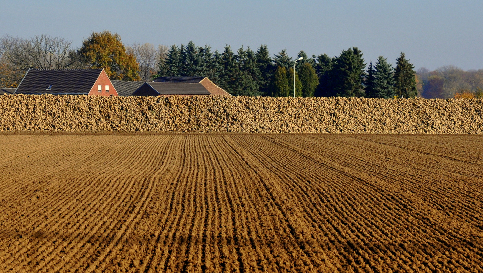Herbsthügel am Niederrhein