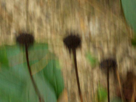 Herbsthüte