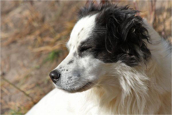 Herbsthund (2)