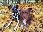 * Herbsthunde *