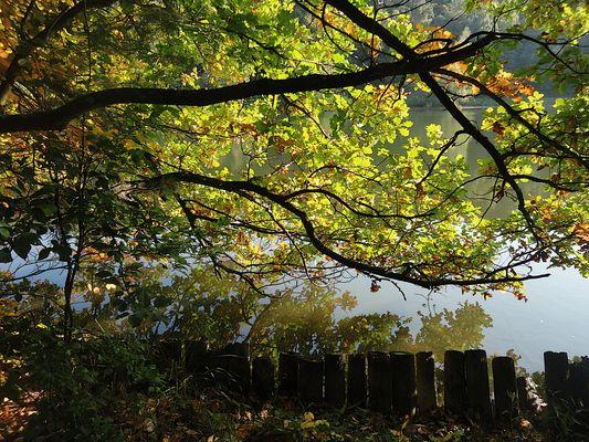 Herbstidylle am Blechhammerweiher