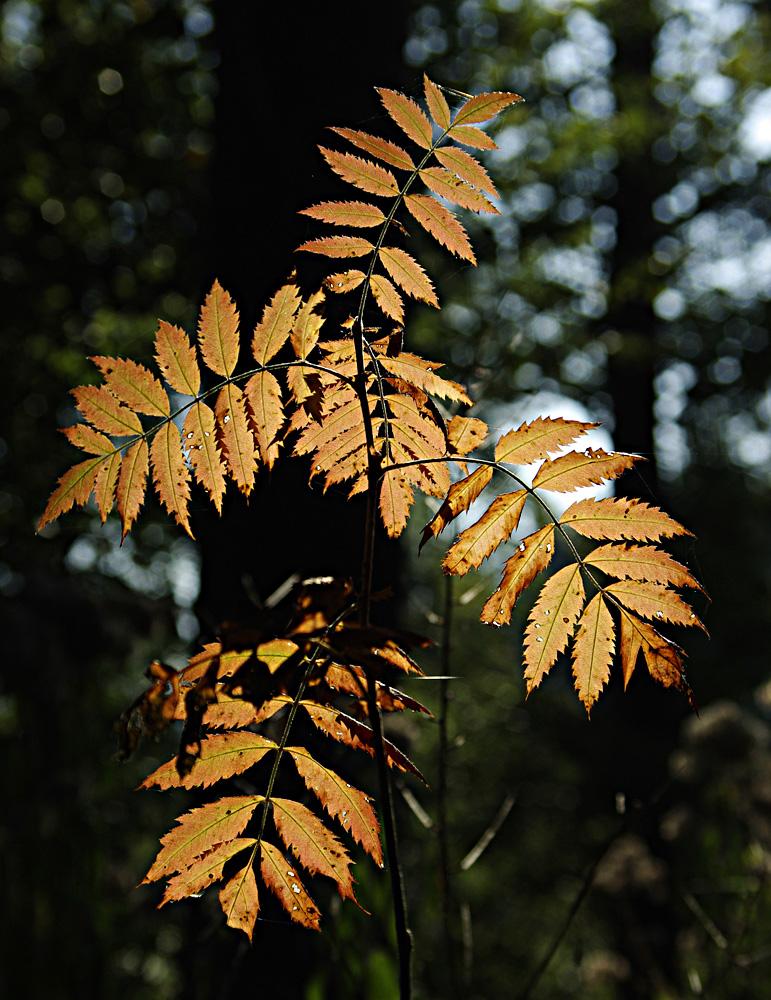 Herbstimpresionen1