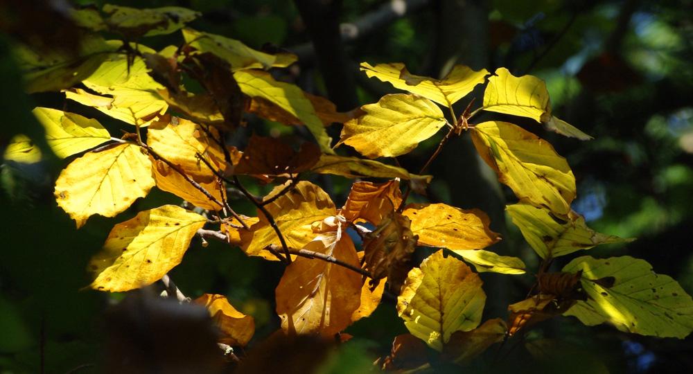 Herbstimpresionen2