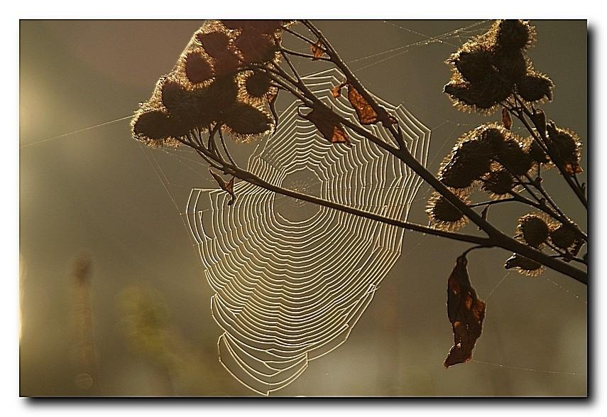 Herbstimpression 02
