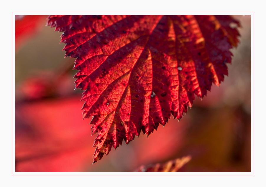 Herbstimpression [03]