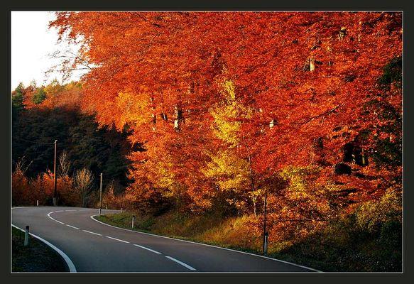 Herbstimpression #1