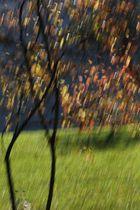 Herbstimpression 2