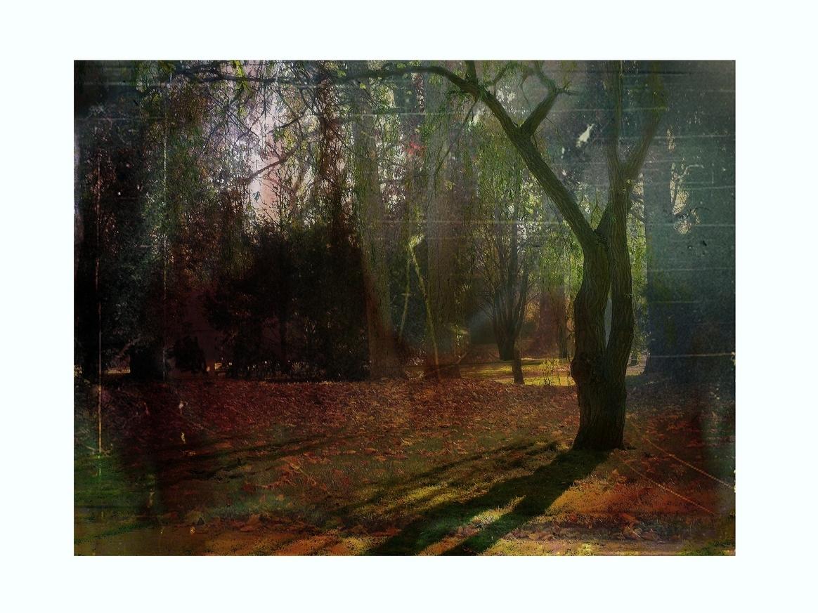 Herbstimpression (4)