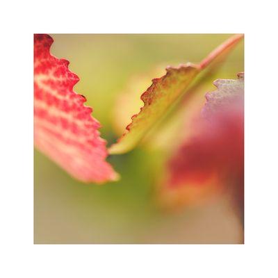 Herbstimpression...