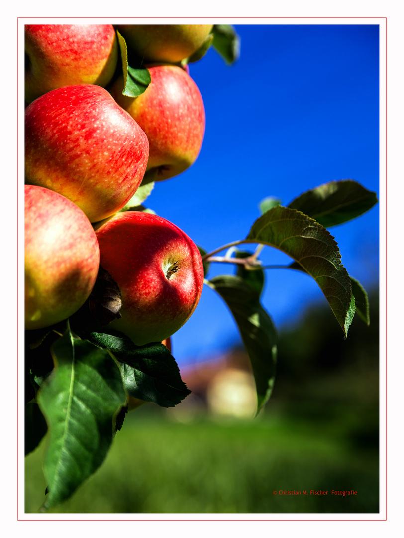 "Herbstimpression ""Apfel"""