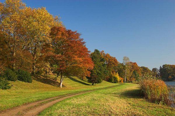 Herbstimpression aus dem Wörlitzer Park